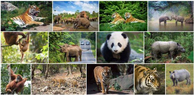 Asia Fauna