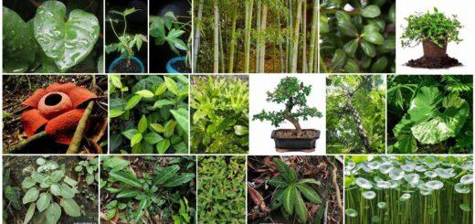 Asia Plant